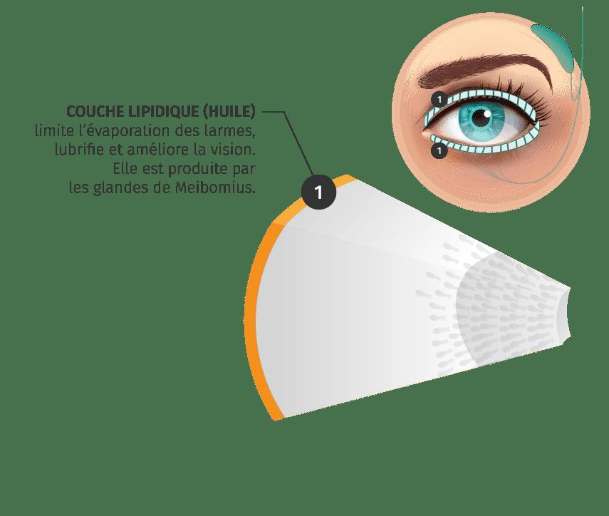 Couche lipidique des larmes
